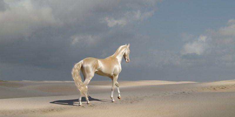Akhal Teke horse in the desert