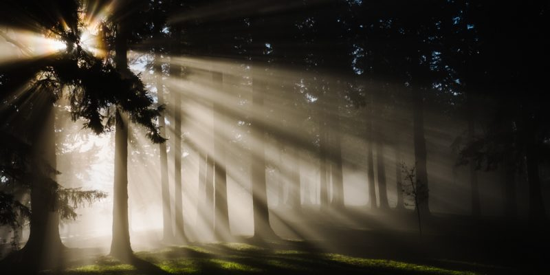 Sunbeams through the trees