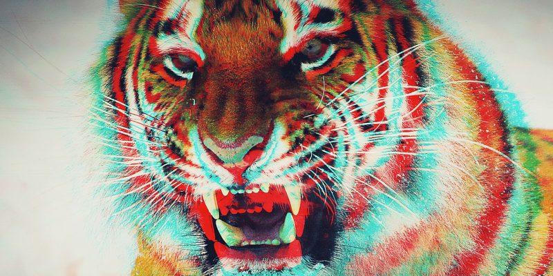 Multi-coloured tiger