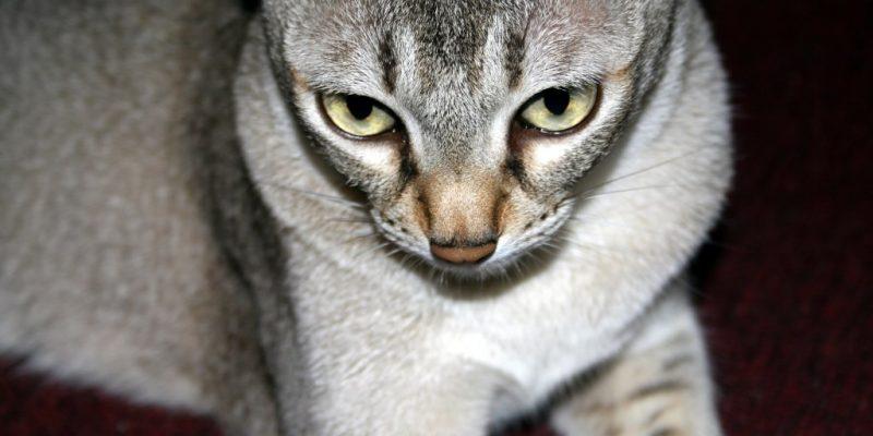 My cat Nimue
