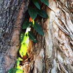 Paper Thin Bark