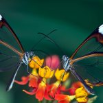 Stained Glass Wings