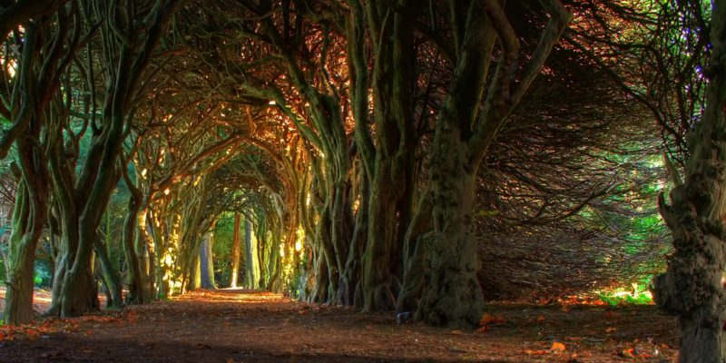 Fairytale Tree Tunnel by Jacco55