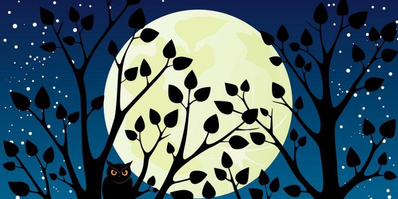 Owls In Moonlight