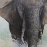Ivory Burden