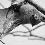 Cloak Of Bats