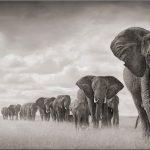 An Ivory Line